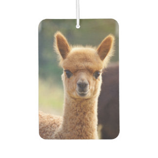 Beautiful Baby Alpaca Air Freshener