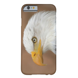Beautiful Bald Eagle Barely There iPhone 6 Case