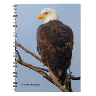 Beautiful Bald Eagle in a Tree Spiral Notebook
