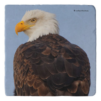 Beautiful Bald Eagle in a Tree Trivet