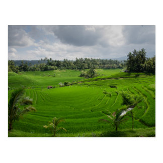 Beautiful Bali Countryside Postcard
