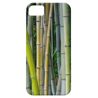 Beautiful bamboo grove iPhone 5 cover