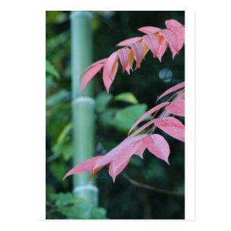 Beautiful Bamboo. Postcard