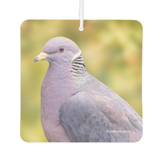 Beautiful Band-Tailed Pigeon in My Backyard Car Air Freshener