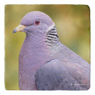 Beautiful Band-Tailed Pigeon in My Backyard Trivet