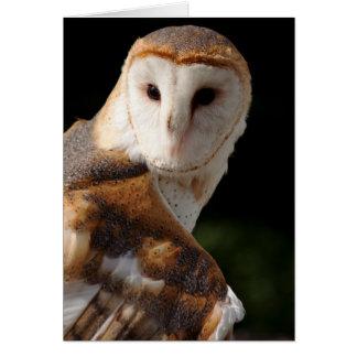 Beautiful Barn Owl notecard
