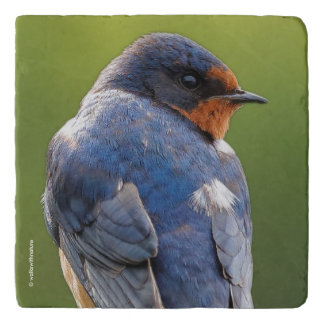 Beautiful Barn Swallow Trivet