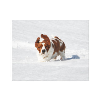 Beautiful Basset Hound in Snow on Canvas