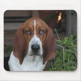 Beautiful Basset Hound Mouse Pad