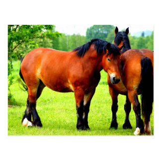 Beautiful Bay Draft Horses In Lush Green Meadow Postcard