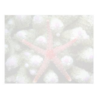 Beautiful Beautiful starfish Personalized Letterhead