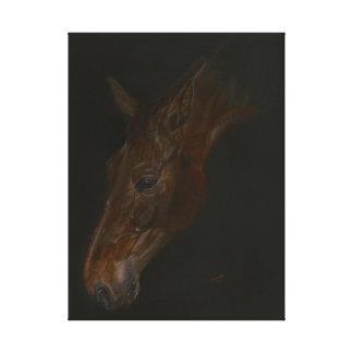 beautiful Belgian Warmblood horse painting Canvas Print