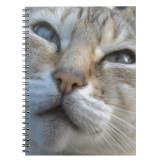 Beautiful Bengal Spiral Notebook