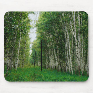 Beautiful Birch Tree Forest Mouse Pad