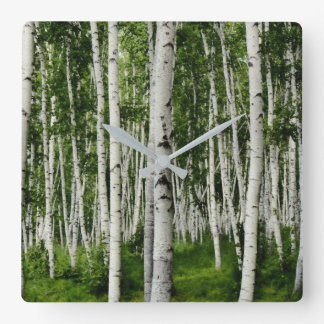 Beautiful Birch Tree Forest Square Wall Clock