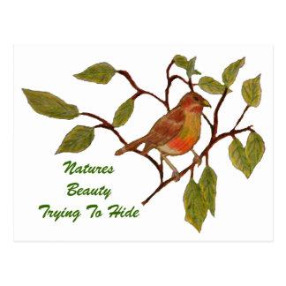 Beautiful Birdie Post Card