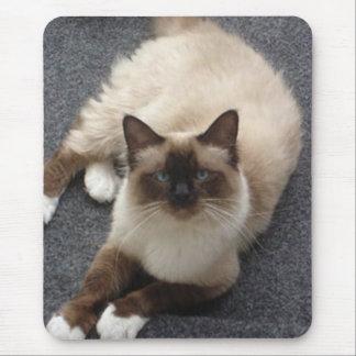 Beautiful Birman cat Mouse Pad