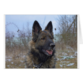 beautiful black and tan German Shepherd puppy Card