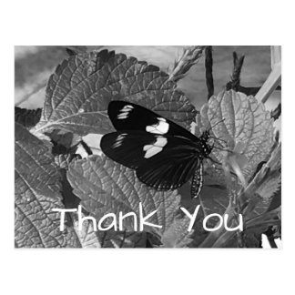 Beautiful Black and White Butterfly Thank you Postcard