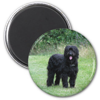Beautiful black briard dog fridge magnet, gift magnet