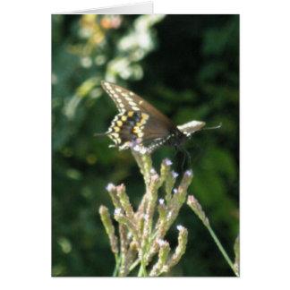 Beautiful Black Butterfly Card