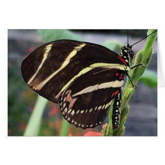 Beautiful Black Butterfly with Yellow Stripes Card