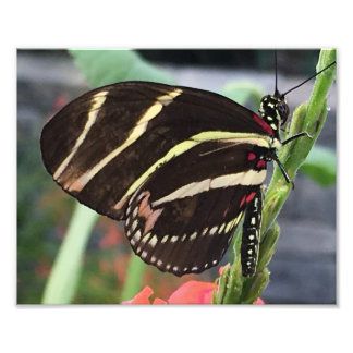 Beautiful Black Butterfly with yellow stripes Photo Art