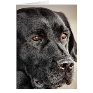 Beautiful Black Labrador Retriever dog design Card