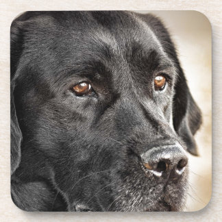 Beautiful Black Labrador Retriever dog design Coaster