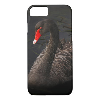 Beautiful Black Swan with a Bright Red Beak iPhone 7 Case