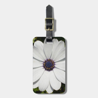 Beautiful Blossoming White Osteospermum Luggage Tag