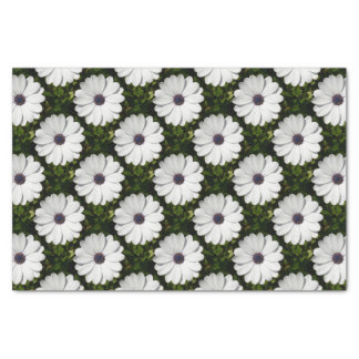 Beautiful Blossoming White Osteospermum Tissue Paper
