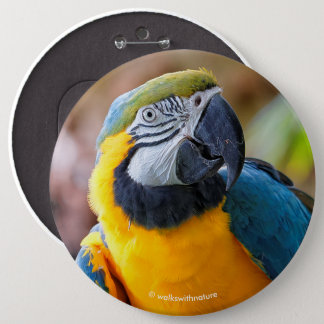 Beautiful Blue and Gold Macaw 6 Inch Round Button