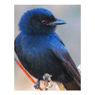 Beautiful blue bird nature scenery letterhead design