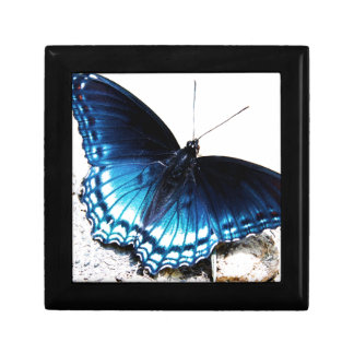 Beautiful Blue Butterfly Gift Box