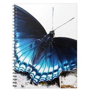 Beautiful Blue Butterfly Notebook