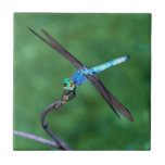 Beautiful Blue Dragonfly Photo Tile