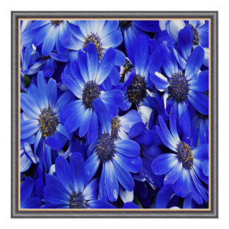 Beautiful Blue Flowers Poster