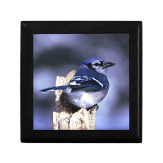 Beautiful Blue Jay bird Gift Box