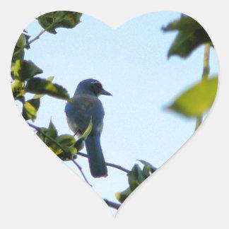 Beautiful Blue Jay Bird Heart Sticker