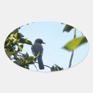Beautiful Blue Jay Bird Oval Sticker