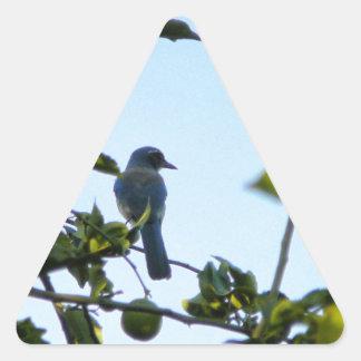 Beautiful Blue Jay Bird Triangle Sticker