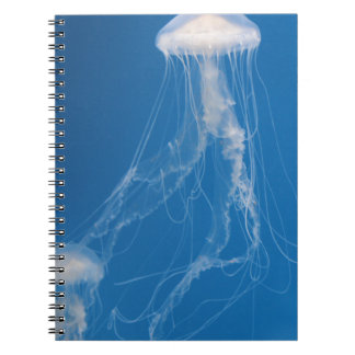 Beautiful Blue Jellyfish Notebook