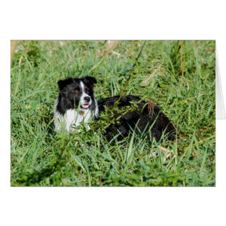 Beautiful Border Collie Note Card