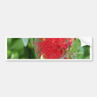 Beautiful Bottle Brush Flower With Garden Backgrou Bumper Sticker