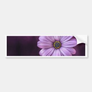 Beautiful, bright, elegant, pink-purple daisy bumper sticker