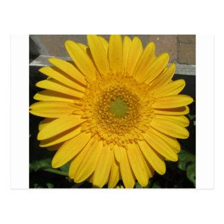 Beautiful brilliant yellow flower postcard