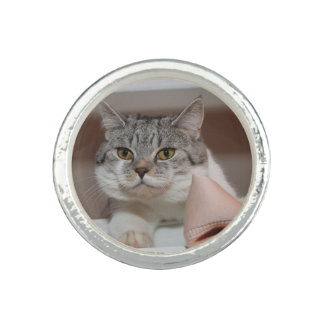 Beautiful British Shorthair Tomcat Photo Ring