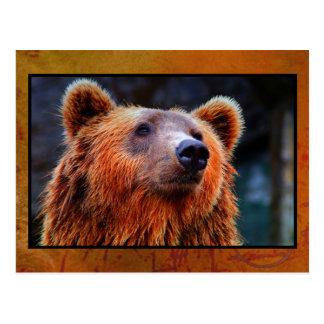 Beautiful Brown Bear Portrait Wildlife Photo Postcard
