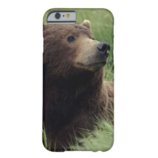 Beautiful brown bear resting in the meadow barely there iPhone 6 case